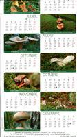 Calendari: Bolets comestibles del Port i la guia dels bolets comestibles del Port