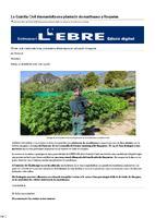 La Guàrdia Civil desmantella una plantació de marihuana a Roquetes.