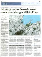 Alerta per nous focus de sarna en cabres salvatges al Baix Ebre