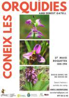 Coneix les Orquídies
