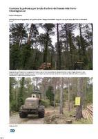 Continua la polémica per la tala d'arbres del Massís dels Ports.
