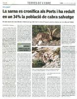 La sarna es cronifica als Ports i ha reduït en un 34% la població de cabra salvatge.