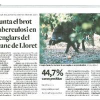 Repunta el brot de tuberculosi en els senglars del barranc de Lloret