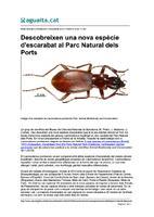 Descobreixen una nova espècie d'escarabat al Parc Natural dels Ports