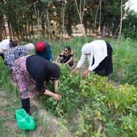 L'Ecohort del Canal de Roquetes, un projecte de solidaritat sostenible.