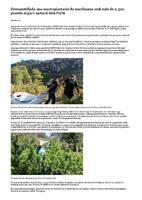 Desmantellada una macroplantació de marihuana amb més de 2.500 plantes al parc natural dels Ports.