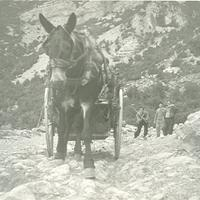 El caragol, pujada amb matxo per l'antiga carretera al Port. 1950
