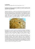 El Museu de Tortosa presenta la troballa d'un fòssil de rèptil marí del Juràssic a l'àrea dels Ports