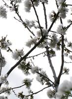 22_03_2008.jpg